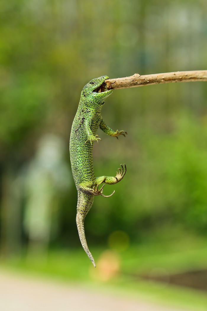 Raging Thunder Lizards are tenacious in promoting their financial advisor practice.